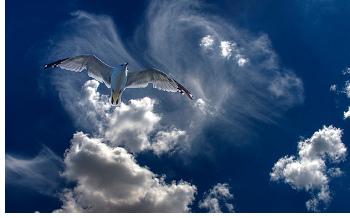 Jonathan Livingstone, un jeune goéland casse-cou, en a assez de sa vie ennuyeuse avec les mouettes. Il préfère perfectionner son art de voler pour atteindre des vitesses aussi rapides que possible.